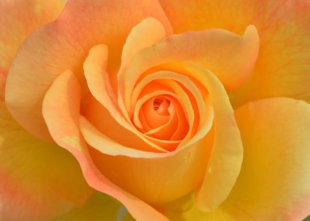 LarisaAstrologer_Blog_Astrowinwin_Romantic_Love